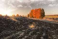Snowy countryside Royalty Free Stock Images
