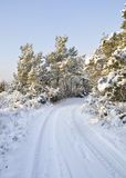 Snowy countryside road and trees Royalty Free Stock Photography