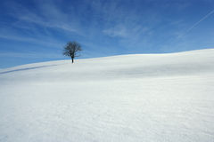 Snowy covered meadow Stock Photos