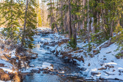 Snowy Creek. A creek surrounded in snow in Medicine Bow National Forest Royalty Free Stock Image