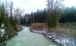 Snowy Creek. Winder at the creek Royalty Free Stock Image