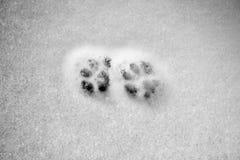 Snowy crust, feline prints trace, white background. Snowy crust, feline prints trace, white background Stock Photography