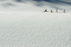 Snowy crust, white background Stock Photo