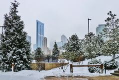 Snowy day in Chicago. Winter Chicago cityscape with downtown skyscrapers in a mist and trees covered by fresh snow on a foreground Stock Images