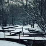 Snowy day. Empty walkway in the park. Winter scene Royalty Free Stock Photo