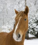 Snowy day horse Stock Images