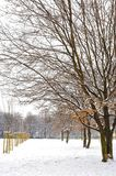 Snowy day in the park Stock Photos