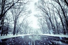 Snowy day road and trees Royalty Free Stock Photography