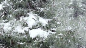 Snowy day, snow on pine tree stock video footage