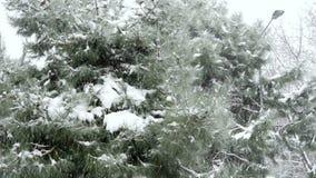 Snowy day, snow on pine tree stock footage
