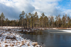 Snowy day in  winter  at bog lake Royalty Free Stock Images
