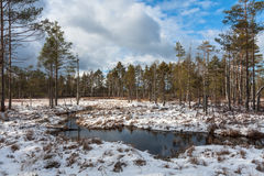 Snowy day in winter at bog lake Stock Photo