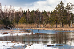 Snowy day in  winter  at bog lake Royalty Free Stock Image