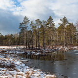 Snowy day in  winter  at bog lake Stock Photography