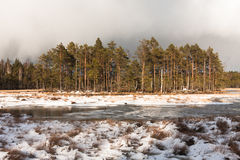 Snowy day in  winter  at bog lake Royalty Free Stock Photos