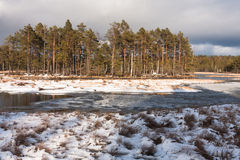 Snowy day in  winter  at bog lake Stock Image