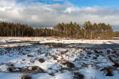 Snowy day in  winter  at bog lake Stock Photos