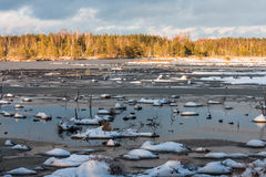 Snowy day in  winter  at bog lake Royalty Free Stock Photo