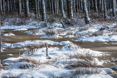 Snowy day in  winter  at bog lake Stock Images