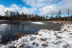 Snowy day in  winter  at bog lake Royalty Free Stock Photography