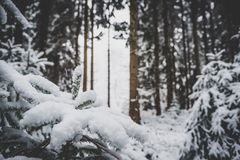Snowy day in the woods Royalty Free Stock Images