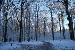 Snowy deciduous forest Stock Photography