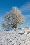 Snowy deciduous tree. Deciduous tree with frost in winter landscape Royalty Free Stock Photography