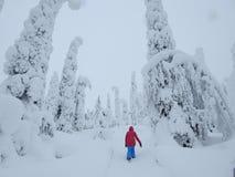 Snowy del nord Immagini Stock Libere da Diritti