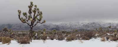 Snowy Desert Panorama. A panoramic view of a rare high desert snow in Joshua Tree National Park Stock Photo