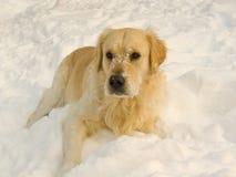 Snowy dog Stock Photo