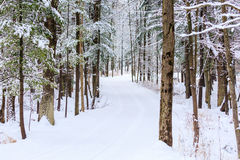 Snowy Drive Way. Long driveway in the woods covered with snow Stock Images