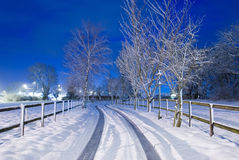 Snowy Driveway. A snowy tree lined driveway royalty free stock photo