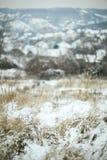 Snowy dry grass Stock Photo