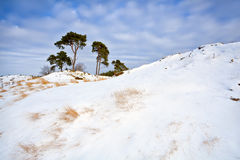 Snowy dunes and pine over blue sky Stock Image