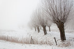 Snowy Dutch landscape with pollard willows. Stock Photo