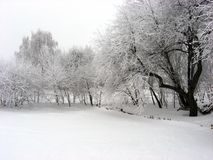 Snowy e gelido fotografia stock libera da diritti