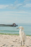 Snowy Egret at the beach Stock Photos