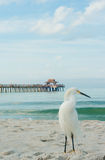 Snowy Egret at the beach Royalty Free Stock Photography