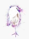 Snowy Egret - standing on one leg - illustration Stock Image