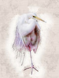 Snowy Egret - water color illustration Royalty Free Stock Image