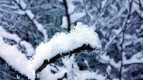 Winter close up. Snowy eiderdown on a branch Royalty Free Stock Photos