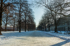 Snowy English Garden Park in Munich Royalty Free Stock Photos