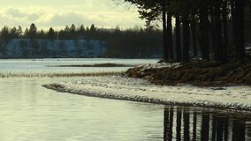 Snowy evening shore with pine trees reflected in calm lake water. Covered with the first autumn snow the shore of the lake with pine trees and pine trees stock video
