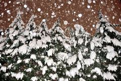 Snowy Evergreens Royalty Free Stock Images