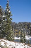 Snowy Evergreens by Ward Creek Reservoir. Blue Spruce by a lake on the Grand Mesa, Colorado Stock Photography