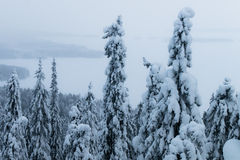 Snowy expanses Royalty Free Stock Images
