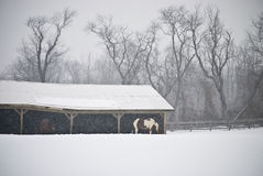 Snowy Farm Royalty Free Stock Photography