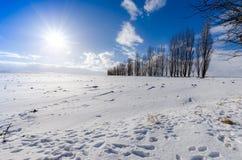 Snowy-Feld verunreinigt mit Stücken Lehm Eingefaßt durch Pappeln Stockfoto