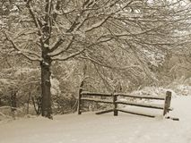 Snowy Fence. This is a sepia tone shot of a fence in a snowy woods Royalty Free Stock Images