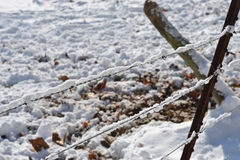 Snowy fence line Stock Images